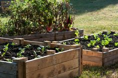 raised beds from pallets | Wooden pallets used to make raised garden beds freshly ... | Home ide ...