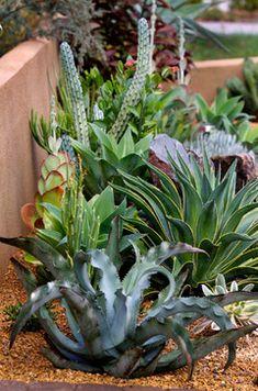 Succulent Gardens Design - contemporary - landscape - San Diego - Better Landscape and Gardens