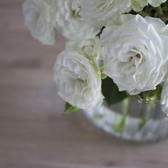 Bloomsocial.nz flowers and botanical delivery spray roses