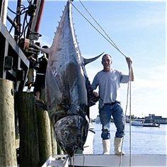 Giant Blue Fin Tuna caught on the Labrador