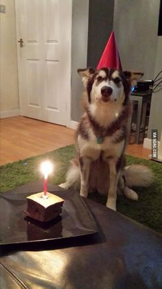 So it was my dogs first birthday in Tuesday
