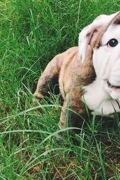 7 Tricks for Taking Better Pictures of Your Dog via @PureWow