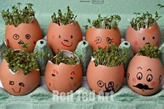 Cress Heads | Easy Craft Projects For Kids | Fun DIY Projects