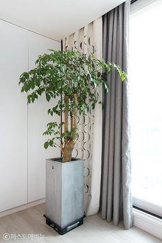 [아파트인테리어] 예쁜집 로망실현! 개구쟁이 두 아들도 웃음가득 47평 보금자리 : 네이버 포스트 Plants, Plant, Planets