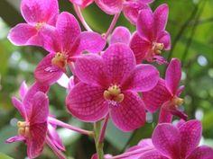 Marie Selby Botanical Gardens, Sarasota, Florida.