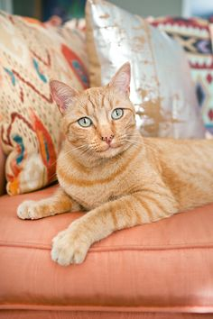 Grace Chon | Dogs, Cats & More Orange Tabby Cats, New Work, Amp, Dogs, Animals, Animales, Animaux, Pet Dogs, Doggies