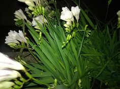 Lovely flowers (photo by Create Your Own Website, Photo L, Flower Photos, Flowers, Plants, Plant, Royal Icing Flowers, Flower, Florals