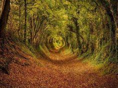 不思議の国へ続くトンネルか