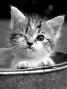 #animaux #mignon