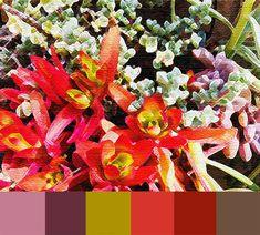 Drought-Resistant-Color-Palette