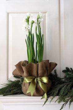 Christmas - Paperwhites wrapped in burlap and tied with a satin bow...
