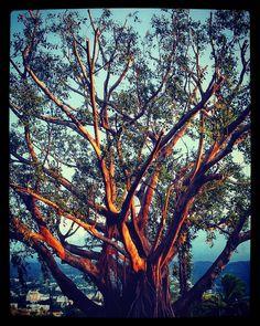 Every sunset is unique... #instagram #igers #instafrance #igersfrance #france #reunionisland #iledelareunion #landscape #paysage #gotoreunion #naturelovers #travel #reunionparadis #islandlife #sunset #sunrise #wanderlust #team974 #974 #tree #botanical #instanature #wanderlust #goldenhour #hiking #neverstopexploring #trailrunning by lagouglaz