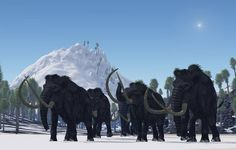 We usually think of woolly mammoths as purely Ice Age creatures. But while most did indeed die out years ago, one tiny population endured on isolated Wrangel Island until 1650 BCE. So why did they finally go extinct? Prehistoric World, Prehistoric Creatures, Vida Animal, Wooly Bully, Great Pyramid Of Giza, The Wooly, Pyramids Of Giza, Extinct Animals, Ice Age