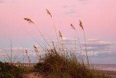 Isle of Palms South Carolina Sea Oats 5x7 by photosbychele on Etsy, $20.00