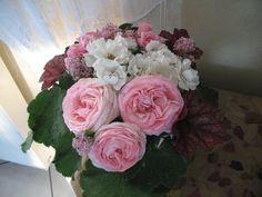 Amateurs de roses, je n'ai pas la prétention de guider vos choix dans vos plantations, mais si vous cherchez un bel arbuste, je v...