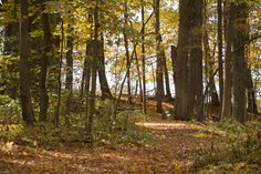It's autumn at The Inn and a perfect time to hike our trails!