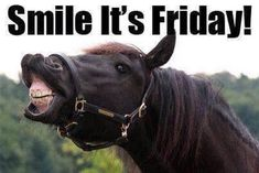 Morning Memes, Morning Greetings Quotes, Good Morning Quotes, Equine Quotes, Horse Quotes, Horse Sayings, Best Friends Funny, Best Friends For Life, Funny Animal Pictures