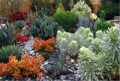 The low-water, low-maintenance requirements of succulents make them appealing to people who are on the go or have little time to care for their gardens.  The wide variety of offerings include many colors, textures and sizes. As this garden demonstrates, color and texture are pervasive in succulent gardens. (Source: gardensbygabriel)