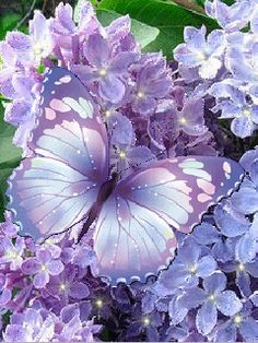 Purple butterfly and flowers.gif