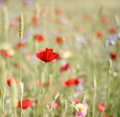 "Wild flowers in a field.  ""A kind heart is a fountain of gladness... "" (Washington Irving)"