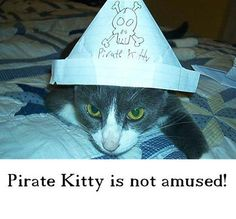 Funny Cat Picture #78