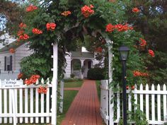 Classic picket fence gate with trumpet vine