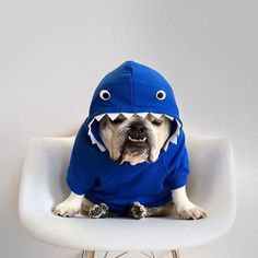 It's only day 2 of the Bulldogs in shark costumes and we already can hardly handle it! Shark Jokes, Cute Bulldogs, British Bulldog, Dog Lady, Dog Dresses, Bulldog Puppies, Dog Pictures, Puppy Love, Fur Babies