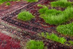 Watch the Grass Grow—Through These Persian Rugs | The Creators Project