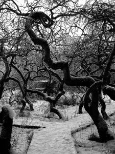 Crooked Bush - Hafford, Saskatchewan.  <3 these trees.