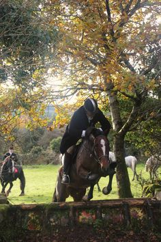 Twix hunting with the Grallagh Harriers. Video: https://www.facebook.com/CoopersHillEquine/videos/1212025888844579/ #loveirishhorses