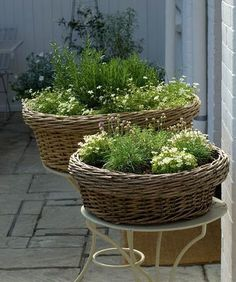 Herbs in Willow Basket Planters. Shallow rooted herbs are great for pretty container gardens like this