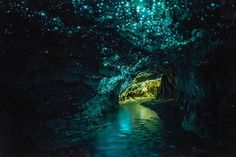 """These are the Waitomo glow caves in New Zealand, and they're named for the glowworms that inhabit them, Arachnocampa luminosa. The glowworms are endemic to New Zealand, and are around the size of an average mosquito. The walls of the caves are covered with a mushroom like fungi related to the genus Pleurotus. Albino cave ants and weta (giant crickets) also inhabit this cave system."""
