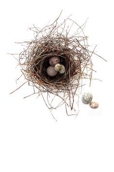 nest with stone eggs - mary jo hoffman Nester, Instagram Inspiration, Egg Nest, Fauna, Bird Art, Beautiful Birds, Beautiful Mess, Bird Feathers, Bird Houses