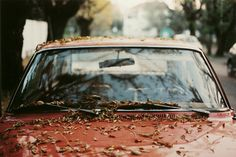 #autumn // via silver lining // by http://www.flickr.com/photos/marianomio/4601164547
