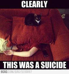 lol that cat is so cute