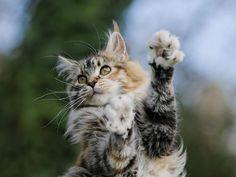 Photo prise par Guy DuprazL'onyxectomie, l'opération consistant à retirer les griffes des pattes antérieures du chat, est interdite dans une vingtaine de pays, dont la France.Trouvez la meilleure assurance pour votre animal de compagnie grâce à ce comparateur en ligneDécouvrez d'autres images de Guy Dupraz