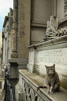 Graveyard cats photo series via http://www.traveling-cats.com