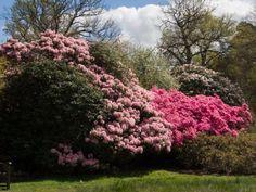 20 tidligblomstrende busker til glede for deg og humla! Verbena, Planting, Seeds, Climbers, Gardens, Flowers, Compost, Lavender, Plants