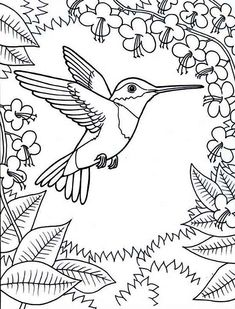 framed-by-flowers-hummingbird-coloring-page - Enjoy Coloring