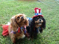 Macey Jayne and Maggie May are ready for the 4th!