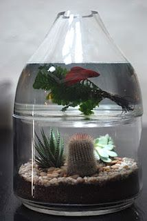 stacking terrariums, underwater plants, succulents, and fish