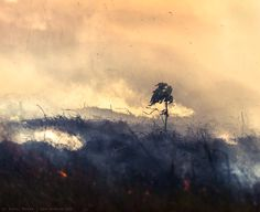 Burning forest - #photography