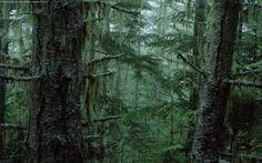Resultado de imagen para bosques de pino hd