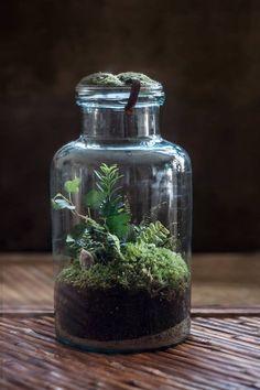 Zdjęcie użytkownika Forest Forever.