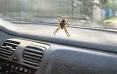 An American In Montana: Spiders...May They All Burn In Hell