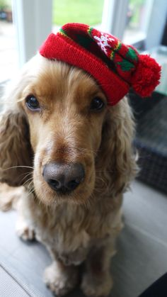 A great Christmas photo for dogs. Merry Christmas Card Puppy Holiday Dogs Santa Claus Dog Puppies Xmas
