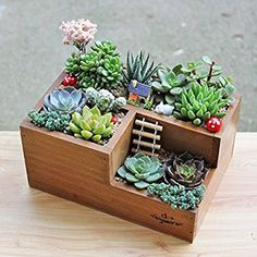 Amazon.com : Chris-Wang Multifunctional 3-Compartment Wooden Desktop Office Supply Caddy/Pencil Holder/Desk Mail Organizer/Succulent Plants Planter(Classic Brown) : Office Products