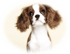 precious pup..