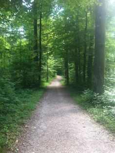 click here for Forrest trail in Zurich, Switzerland  http://earth66.com/rural/forrest-trail-zurich-switzerland/