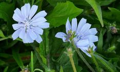 6 Edible Plants That Might Surprise You Edible Plants, Edible Flowers, Taraxacum Officinale, Witch Herbs, Flower Food, Planting Vegetables, Grow Your Own Food, Unique Recipes, Chrysanthemum